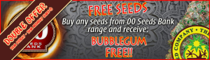 Free Cannabis Seeds - 00 Seed Bank