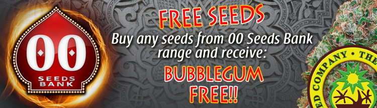Free Cannabis Seeds From 00 Seed Bank