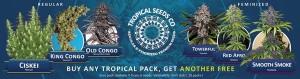 Medical Marijuana Seeds - Buy Tropical Seeds Online