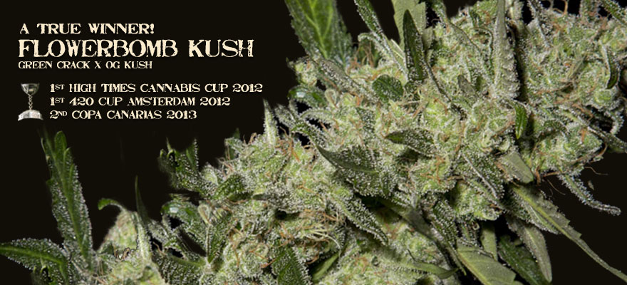 Buy Medical Marijuana Seeds - Flowerbomb Kush Seeds In Stock USA Shipping