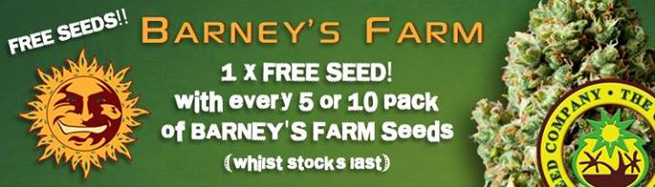Free Cannabis Seeds - Latest Offers - Barneys Farm