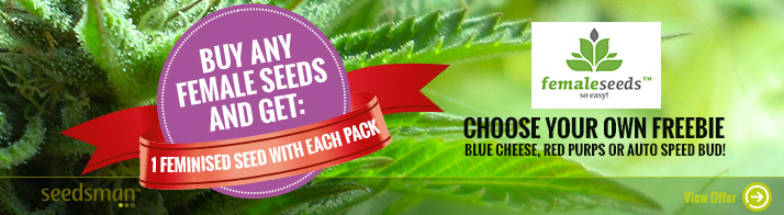Free Cannabis Seeds - Female Seeds