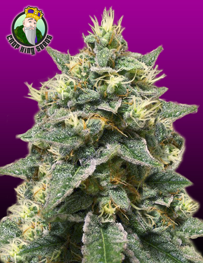Azura Haze Cannabis Seeds