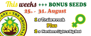 Free Cannabis Seeds 25th - 31st August