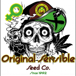 Halloweed Skull Bag Cannabis Seeds - From $12.00