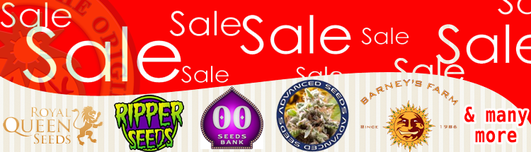 Cannabis Seeds Sale - Click Here