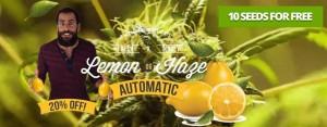 Nirvana Cannabis Seeds Now Shipping To USA