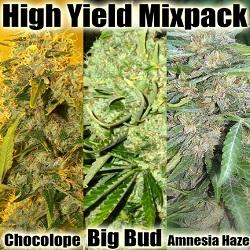 Cannabis Seeds - High Yeild Mix Pack