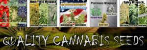 Mixed Feminized Marijuana Seed Packs