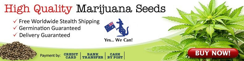 We Deliver Cannabis Seeds To Australia