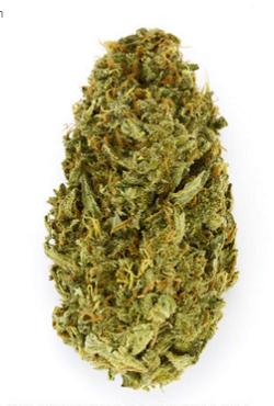 Amnesia Haze Marijuana Seeds
