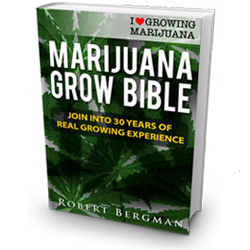 Growing Marijuana Seeds - Free Download