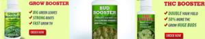 Nutrients For Marijuana Seeds