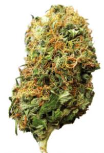 Big Bud Marijuana Seeds