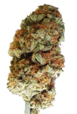 Bubblegum Marijuana Seeds