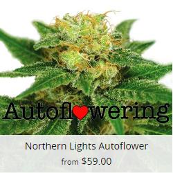 Northern Lights Autoflower Seeds