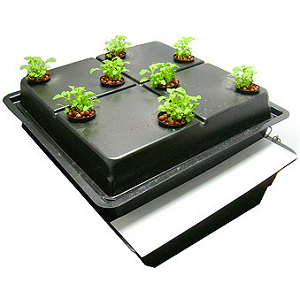 Growing Marijuana Seeds Indoors Hydroponic Method