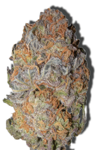 Feminized Girl Scout Cookie Seeds