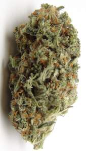 Buy Trainwreck Seeds