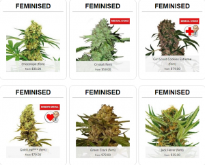 Buy Feminized Cannabis Seeds In Nevada