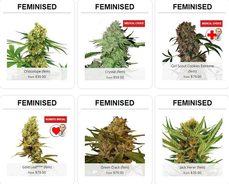 Buy Feminized Cannabis Seeds In Massachusetts