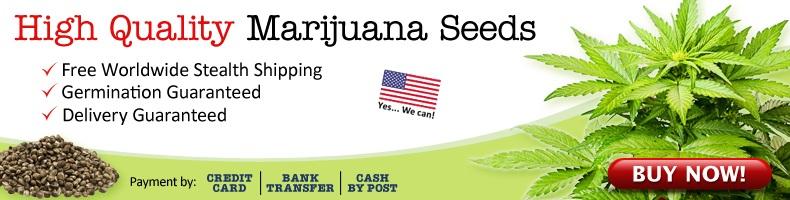 Legally Buy Marijuana Seeds In Delaware