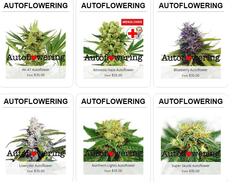Auto Flowering Feminized Marijuana Seeds For Sale