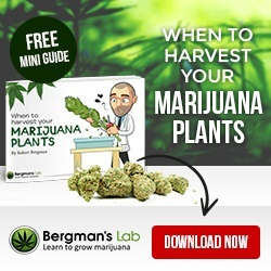 Medical Marijuana Seeds Grow Guide