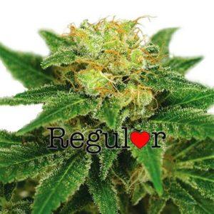 Northern Lights Regular Cannabis Seeds
