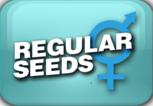 Regular Seeds
