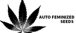 Auto Flowering Feminized Marijuana Seeds For Sale
