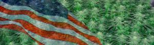 Best Marijuana Seeds 2017