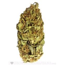 AK 47 Marijuana Strain