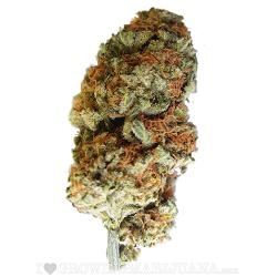 Bubblegum Marijuana Strain