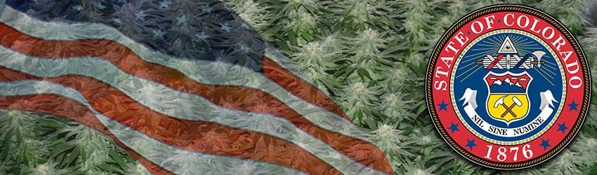 Buy Medical Marijuana Seeds In Colorada