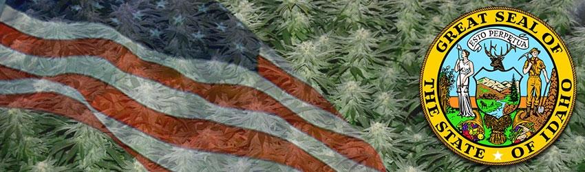 Buy Medical Marijuana Seeds In Idaho