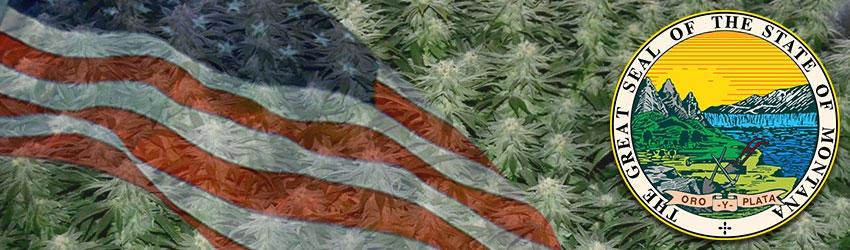 Buy Medical Autoflower seeds In Montana
