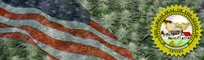 Buy Medical Autoflower Seeds In Nevada