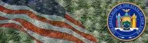 Buy Medical Marijuana Seeds In New York