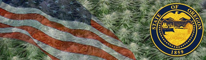 Buy Medical Autoflower Seeds In Oregon