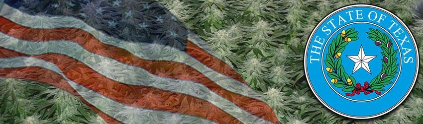 Buy Medical Marijuana Seeds In Texas
