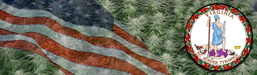 Buy Medical Autoflower Seeds In Virginia