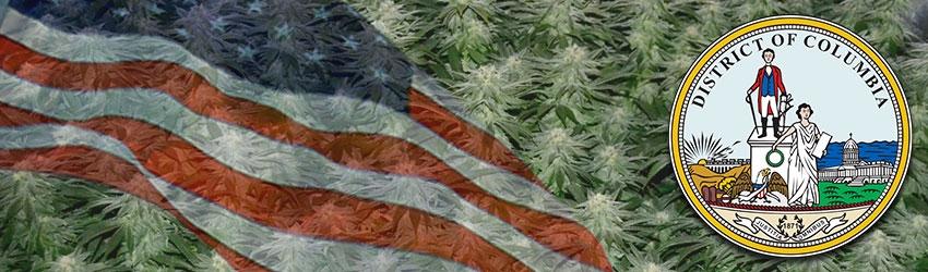 Buy Medical Marijuana Seeds In Washington