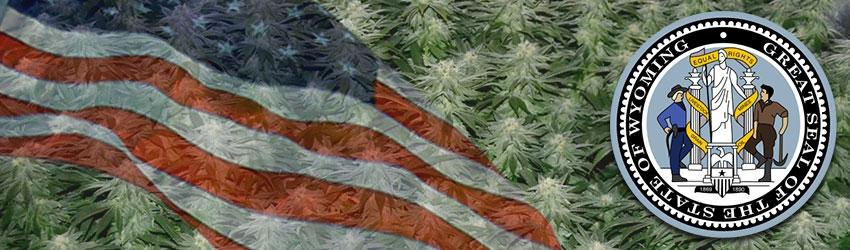 Buy Medical Autoflower seeds In Wyoming
