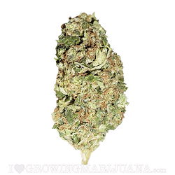 Sour Diesel Marijuana Strain