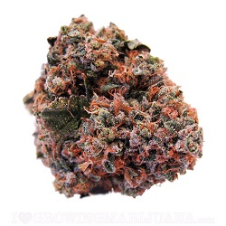 Strawberry Kush Cannabis Strain