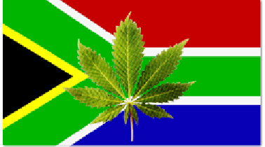 Buy Marijuana Seeds In South Africa