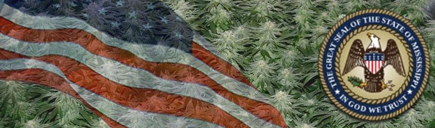 Buy Medical Marijuana Seeds In Mississippi