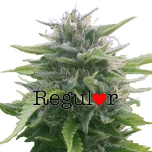 Buy Harlequin Regular Seeds