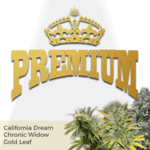 Premium Mixpack Marijuana Seeds